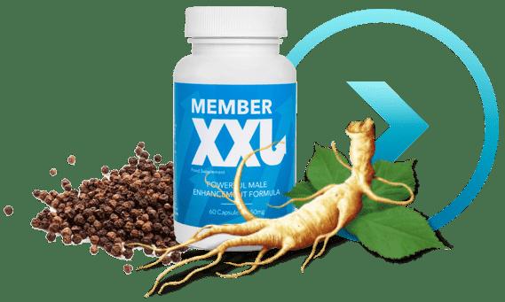 Comment fonctionne Member XXL ?