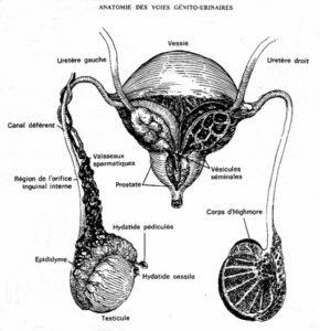 couleur normal du sperme
