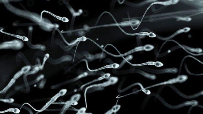 Augmenter volume sperme: les changements dans votre alimentation les plus efficaces.