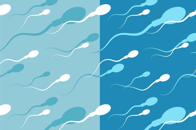 Comment produire plus de sperme ?