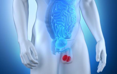 L'importance du massage des testicules.